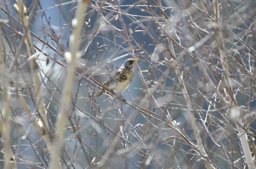 Vogel-unbekannt6539cb7a0a4c1ba0.jpg