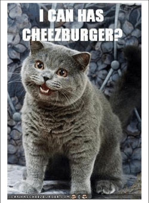 The-most-iconic-LOLcat-I-Can-Has-Cheezburger.png
